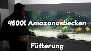 4.500-Liter-Becken – Videos