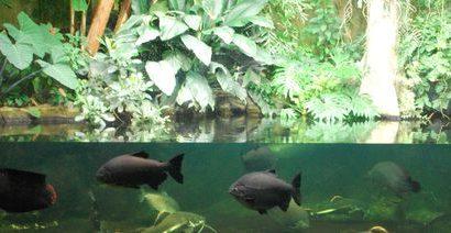 Galerie: Zoo-Aquarium Berlin 2015