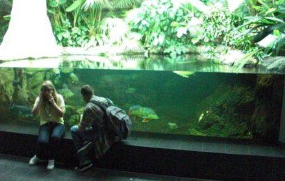 Galerie: Zoo-Aquarium Berlin 2010