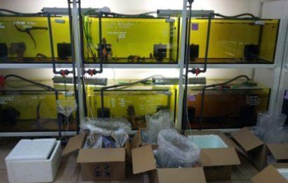 Galerie: Kolumbien-Import 2012